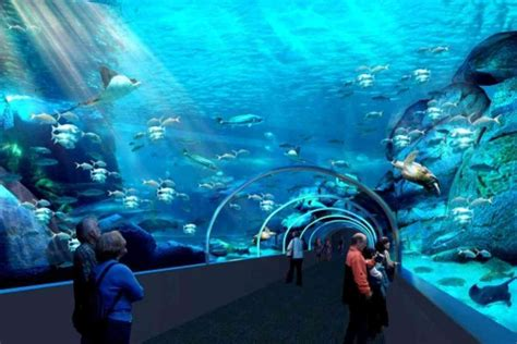 two oceans aquarium has introduced new exhibit drum