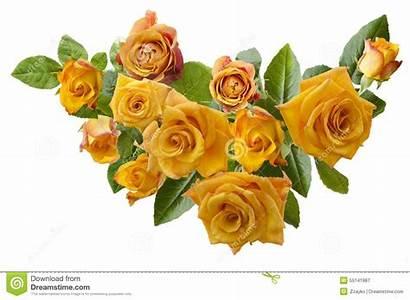 Orange Roses Background Yellowish Bouquet Isolated Frame