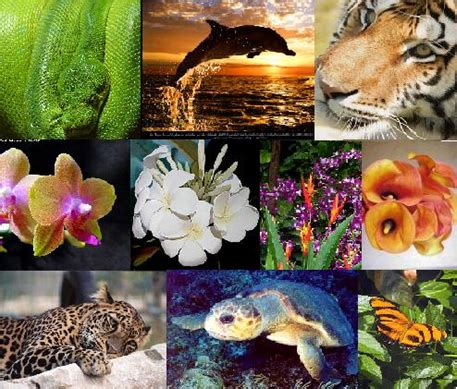 Endangered Animals  Engage Our Eco