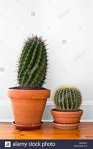 Pot A Cactus : cactus pot inside stock photos cactus pot inside stock images alamy ~ Farleysfitness.com Idées de Décoration