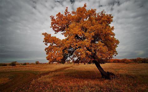 autumn brown landscape - HD Desktop Wallpapers | 4k HD