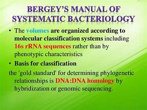 Taxonomy Of Bacteria  Bergey U0026 39 S Manual Of Systematic Bacteriology And