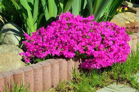 Welche Blumen Vertragen Viel Sonne by Welche Balkonpflanzen Vertragen Viel Sonne Pflanzen Die