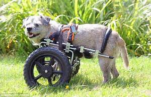 3 legged dog on the move thanks to a £360 WHEELCHAIR ...