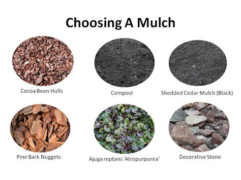mulch best type gardening time mulch so many benefits and so many choices