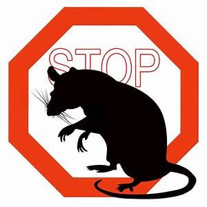 Se Débarrasser Des Guepes : se d barrasser des nuisibles moustiques rats gu pes ~ Melissatoandfro.com Idées de Décoration