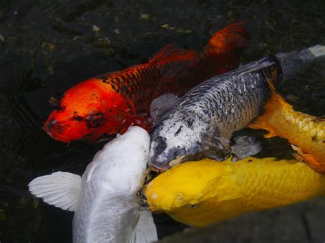 fische fortpflanzung tiere onlinede