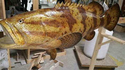 mount grouper goliath hogfish fish mounted catch mounts