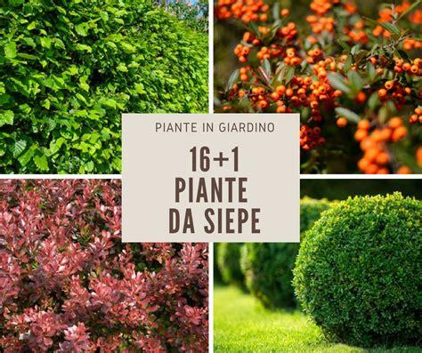 fiori da siepe 17 piante da siepe fai da te in giardino