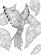 Coloring Paradise Bird Pages Adult Mandala Printable Tropical Doverpublications Drawing Sheets Birds Dover Books Colouring Getcolorings Phoenix Mandalas Template Line sketch template