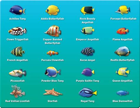 tropical fish names  pictures saltwater