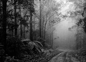 Beautiful Black and White Nature Photography - Web Design ...