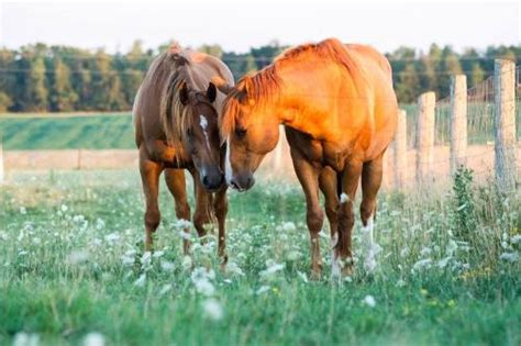 Horse Mating Tumblr