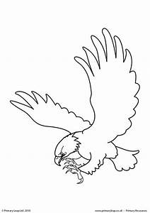 bald eagle worksheets coloring pages With bald eagle diagram