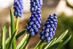 Welche Blumen Blühen Im August : 20 beliebte garten blumen f r fr hling sommer herbst winter ~ Orissabook.com Haus und Dekorationen