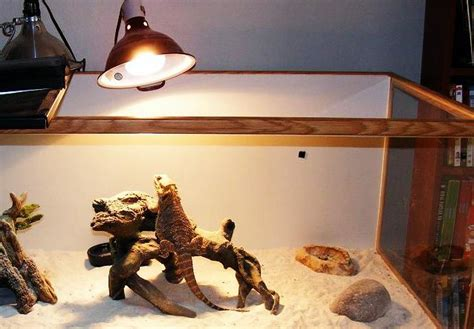 bearded dragon basking light what is the right temperature for bearded dragons