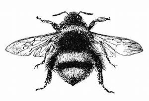 15 Bee Images