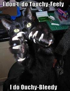 angry cat, funny pictures - Dump A Day