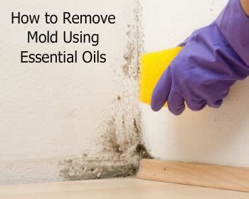 How To Remove Mold Using Essential Oils. Sims 2 Living Room. Best Color For Small Living Room. White French Style Living Room Furniture. Lexington Cherry Dining Room Set. Best Colors To Paint Living Room Walls. Two Living Rooms In One Space. Modern Dining Room Sets For 6. Living Rooms With Leather Sofas