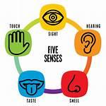 Senses Sense Clipart Transparent Sensory Health Five