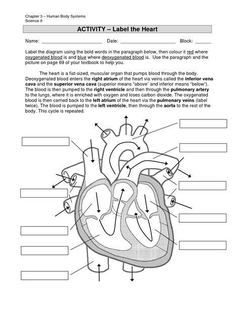 Label Diagram Of Heart  Anatomy Organ