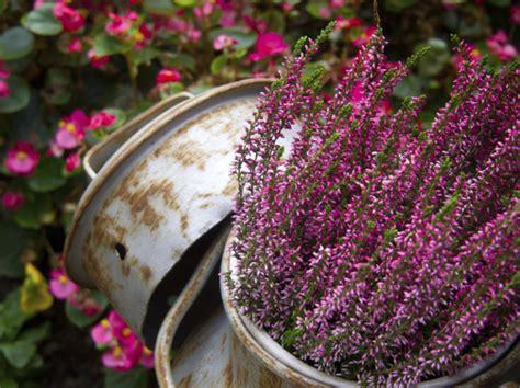 giardino invernale lavori d inverno in giardino unadonna