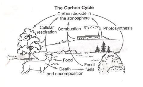 the carbon cycle coloring page worksheet 8th carbon cycle nitrogen cycle worksheets