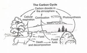 The Carbon Cycle Coloring Page Worksheet