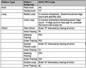 28 Fingerprint Basics Worksheet Answers