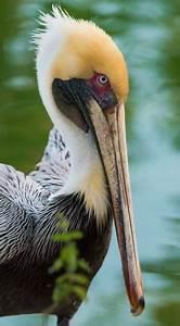 62 royalty free large beak images | Peakpx