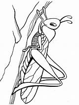 Grasshopper Coloring Pages Printable Print sketch template