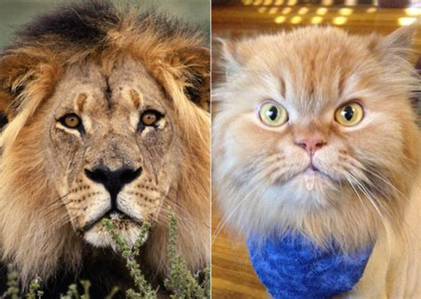 Cute Dogs And Cats With Their Animal Look Alike Cuteness