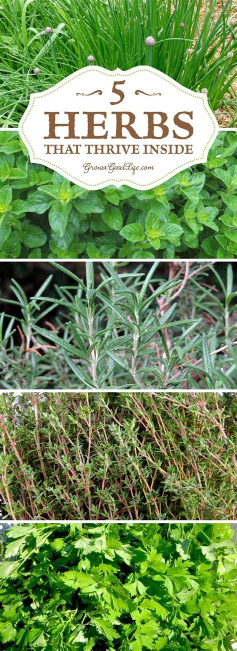 Growing Herbs Inside by Best 25 Growing Herbs Indoors Ideas On Indoor