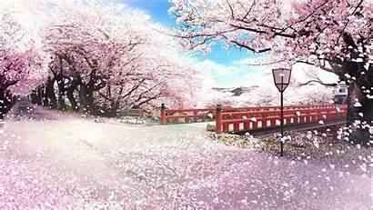 Sakura Anime Japan Wallpapers Mac Backgrounds Wallpaperaccess
