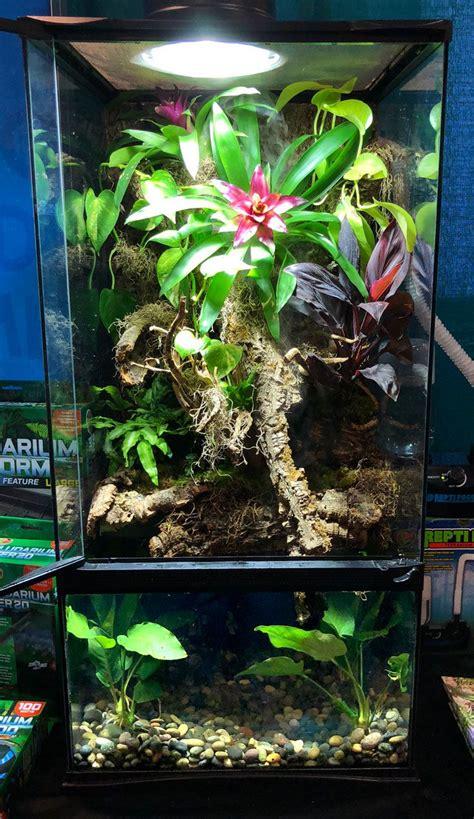 paludarium diy terrarium gecko crested aquarium bottom plants vivarium frogs shrimp dart geckos cherry enclosure tank fish frog tanks zoomed