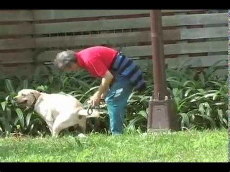 pootrap clean  dog poop   dog  solution