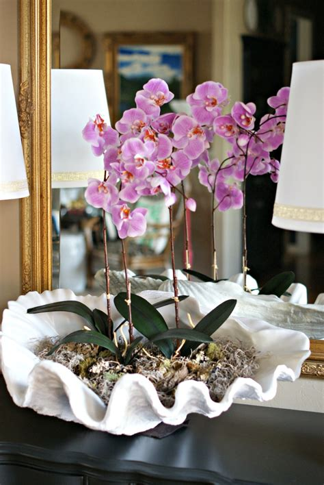clam shell orchid arrangement dimples  tangles