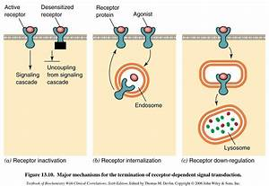Signal Transduction at Howard University College of ...