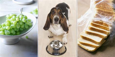 table food for dogs foods that can kill your dog table food not to feed to dog