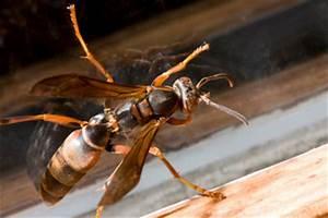 Rolladen Elektrisch Umrüsten : wespennest entfernen feuerwehr wespennest entfernen feuerwehr kontaktieren wespennest unter ~ Orissabook.com Haus und Dekorationen