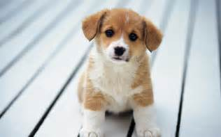 brautkleider aus tã ll so puppies wallpaper 15897245 fanpop