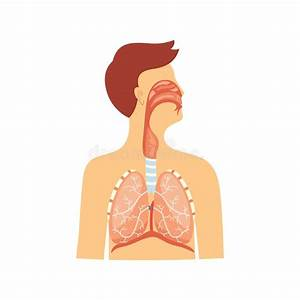 Scheme Of The Respiratory Tract Stock Illustration