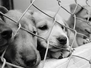Boggs Mountain Humane Shelter, Georgia Animal Shelter ...
