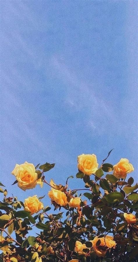 Aesthetic Yellow Flowers Wallpaper Iphone yellow flowers blue sky wallpaper wallpapers in 2019