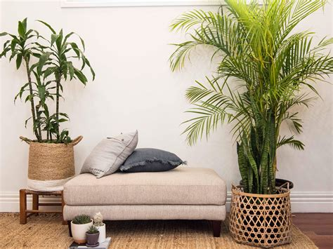 Bedroom Inspiration Plants by Leaf The Best Plants To Grow In Your Bedroom