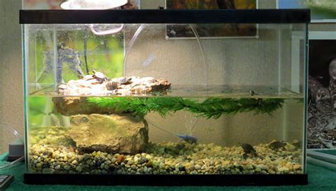 land and water aquarium baby turtle updates