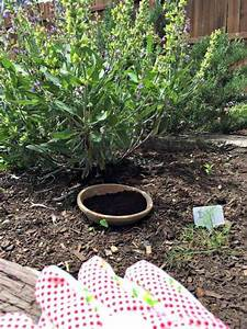 10 reasons to use coffee grounds in the garden forever