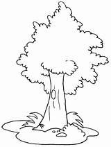 Tree Coloring Oak Trees Drawing Line Colour Luna Printable Getdrawings Disimpan Dari sketch template