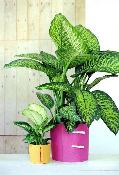 Schusterpalme Als Zimmerpflanze by Unkomplizierte Pflanzen Wohnen Blattpflanzen