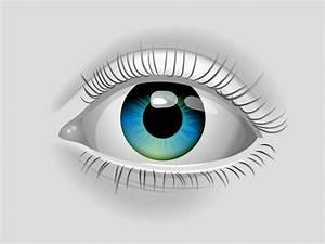 Image Gallery eye vector